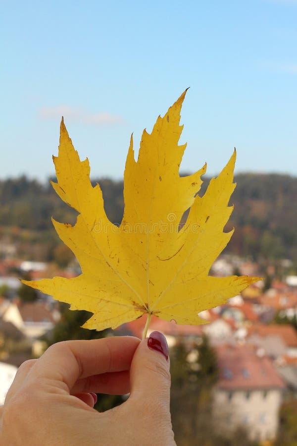 Folha amarela do outono em um fundo de uma paisagem urbana fotografia de stock royalty free