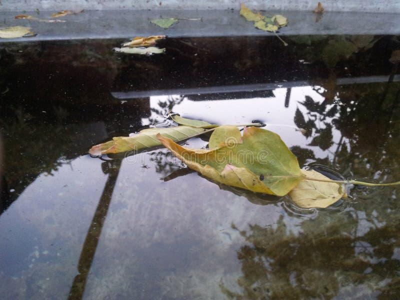 A folha amarela do outono encontra-se em uma poça imagens de stock