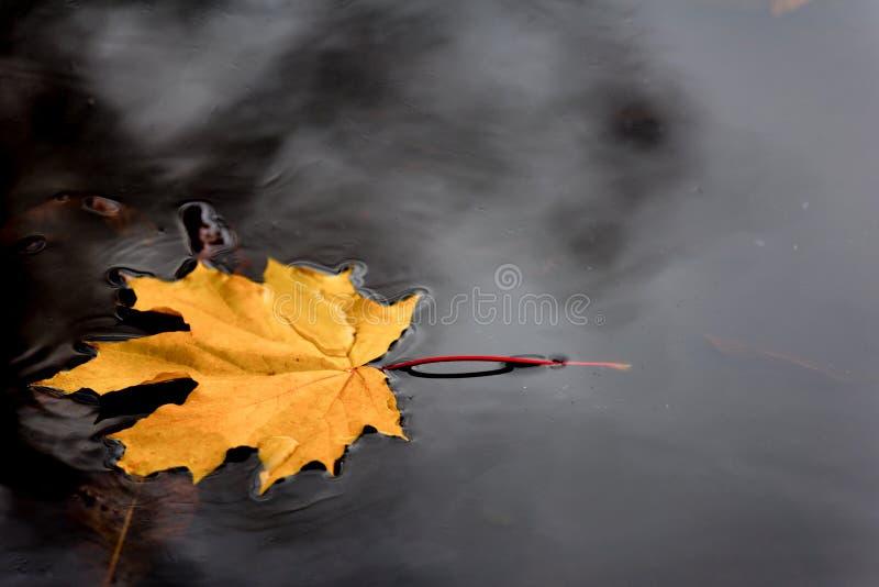 Folha amarela na água fotografia de stock royalty free