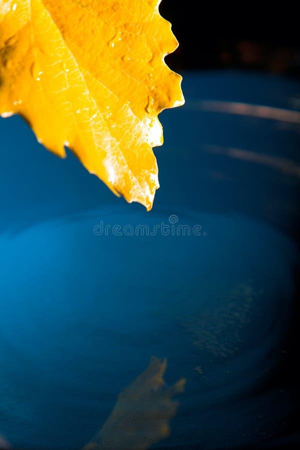 Download Folha amarela na água azul foto de stock. Imagem de outono - 26501096