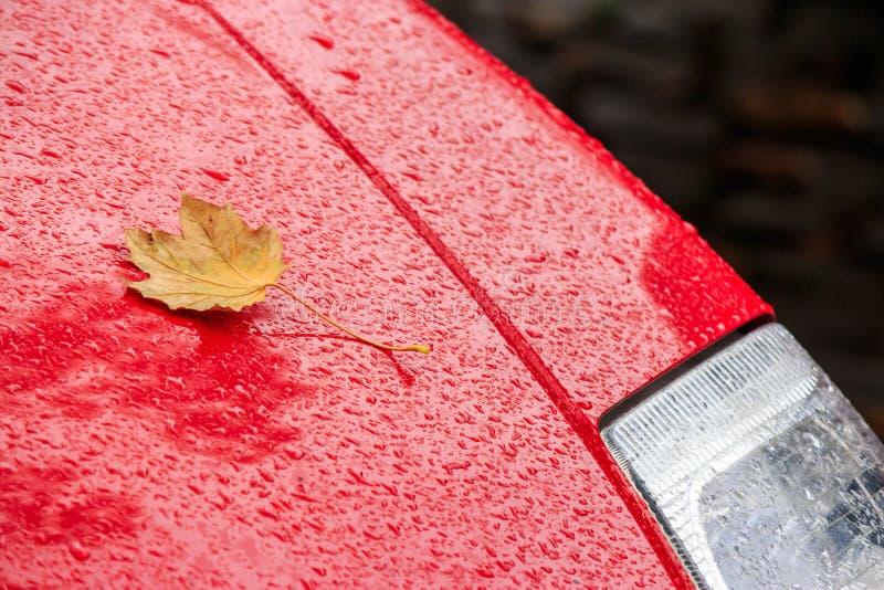 Folha amarela na capa vermelha molhada do carro fotos de stock