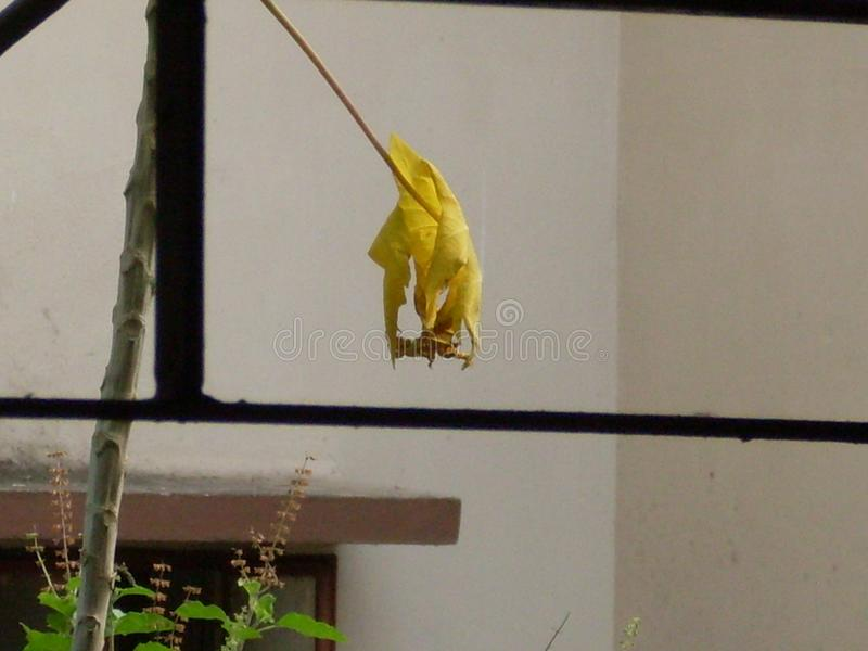 Folha amarela seca cria uma visão artística imagem de stock