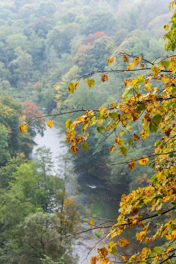 Folha amarelando de uma árvore acima da floresta e do rio no outono adiantado fotos de stock royalty free