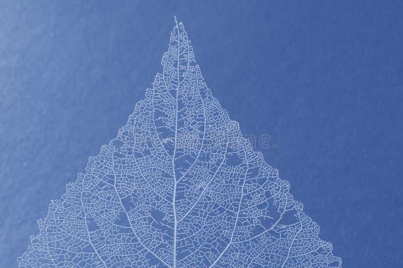 Download Folha azul foto de stock. Imagem de projeto, botany, naughty - 535142