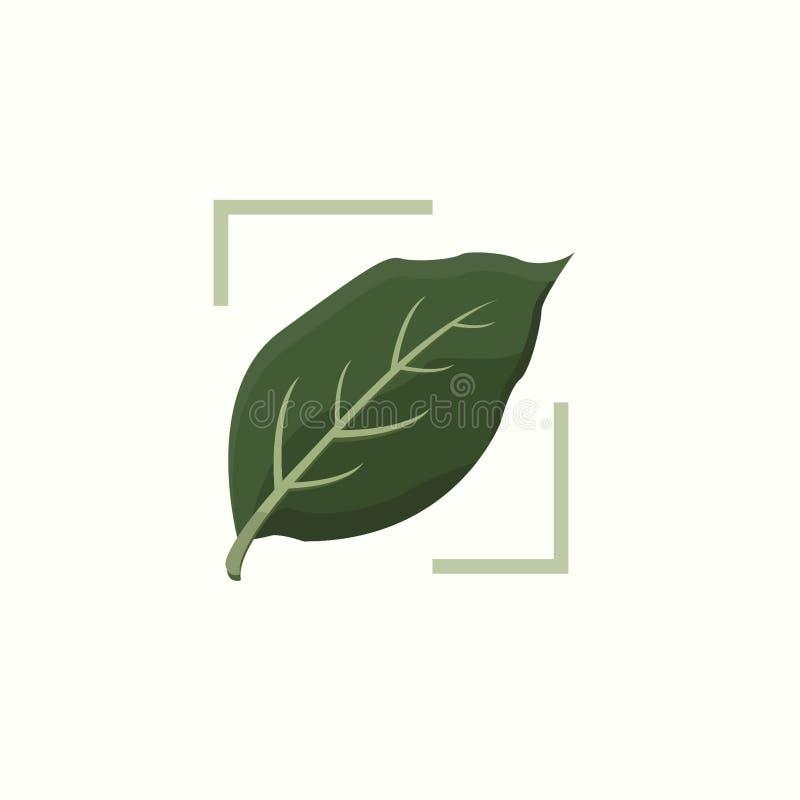 Folha botânica verde do antúrio ilustração royalty free