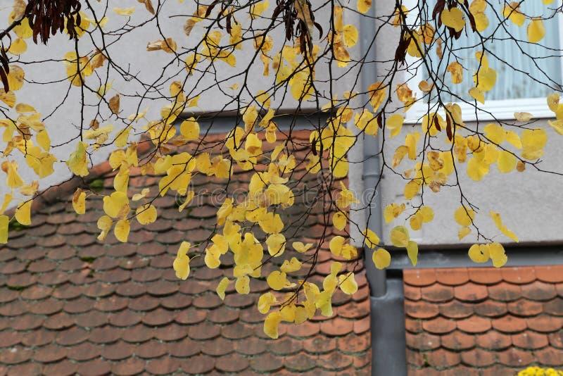 Folha brilhante do outono Folha brilhante do outono em árvores foto de stock royalty free