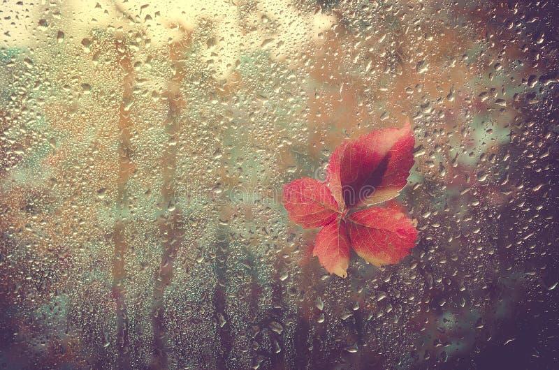 Folha caída colada à janela que obtém molhada das gotas da chuva Aqueça o olhar para fora a janela para o outono imagens de stock