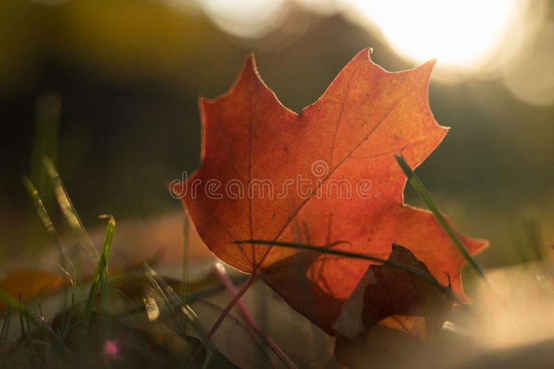 Folha colorida contra o sol imagens de stock