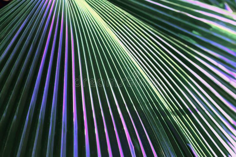 Folha colorida decorativa, planta tropical com cor multycolored tonificada das folhas Teste padrão abstrato, botânico exótico fotografia de stock
