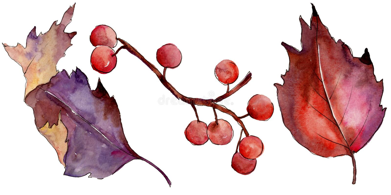 Folha colorida do viburnum da aquarela Folha floral do jardim botânico da planta da folha Elemento isolado da ilustração ilustração stock