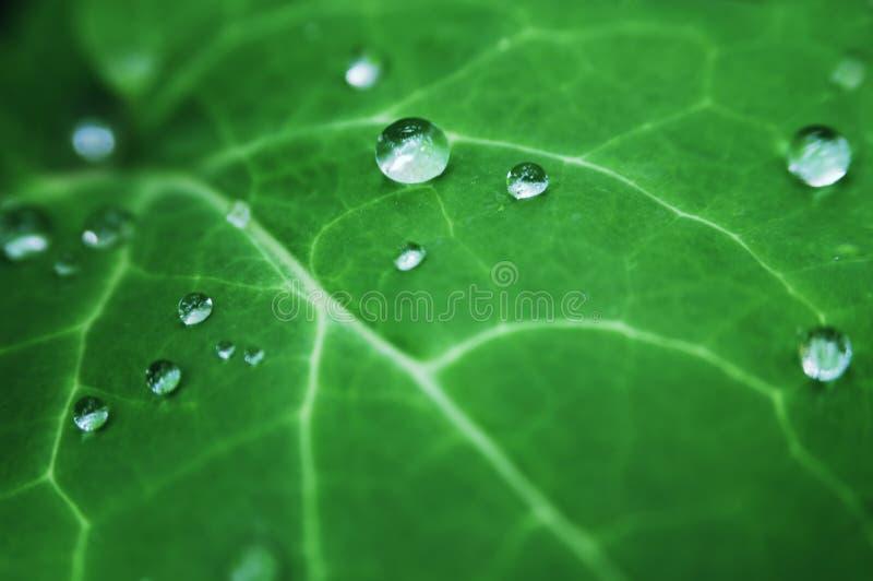 Folha com dewdrops imagem de stock