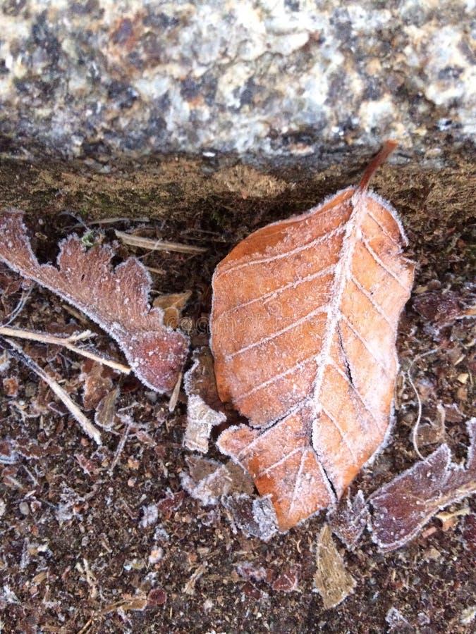 Folha congelada no passeio fotografia de stock royalty free