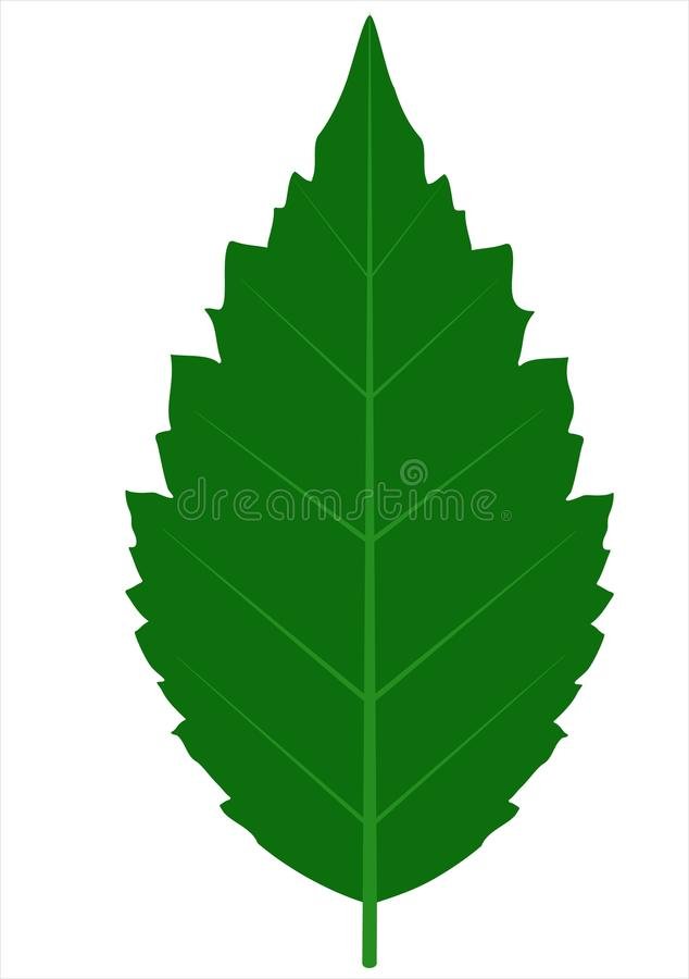 Folha da árvore ilustração stock