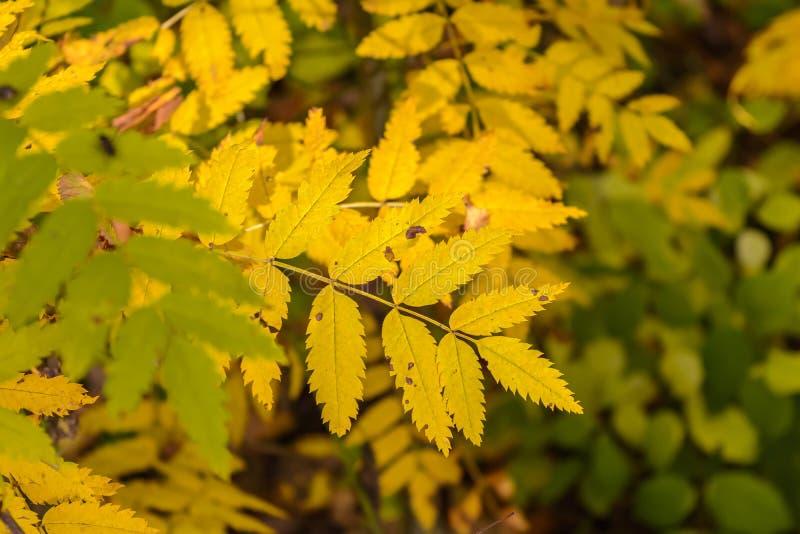 Folha da árvore foto de stock royalty free