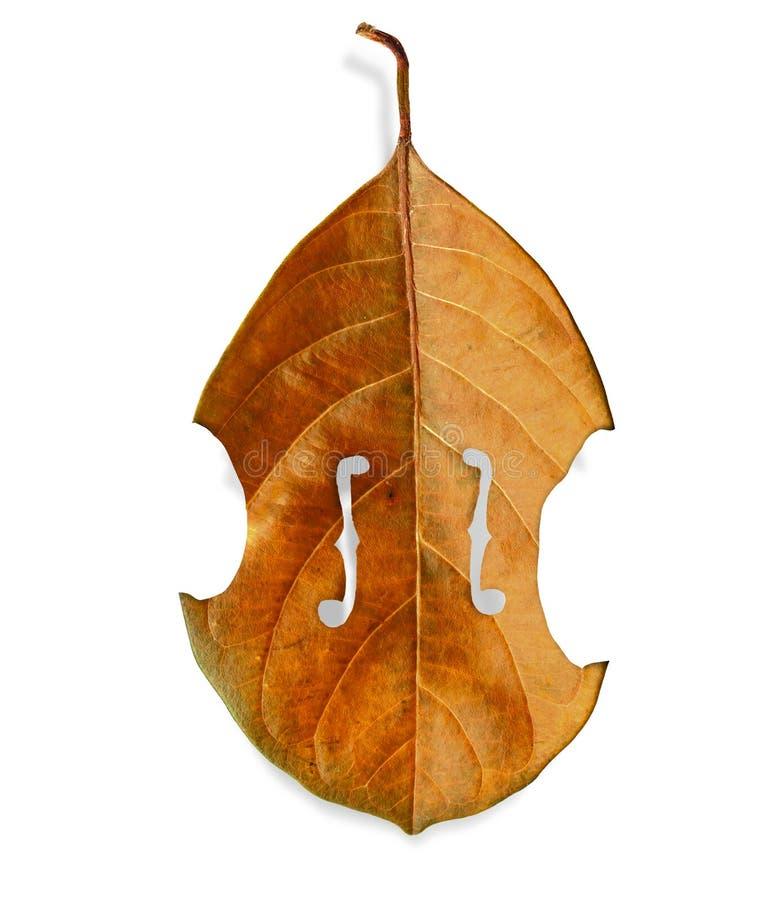 Folha da árvore do violino imagens de stock