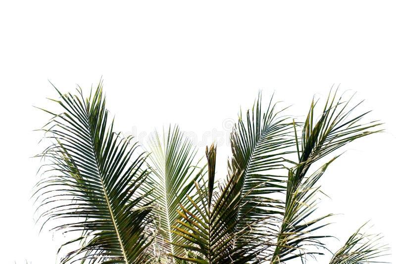 Folha da árvore natureza com espaço de cópia isolado imagem de stock royalty free