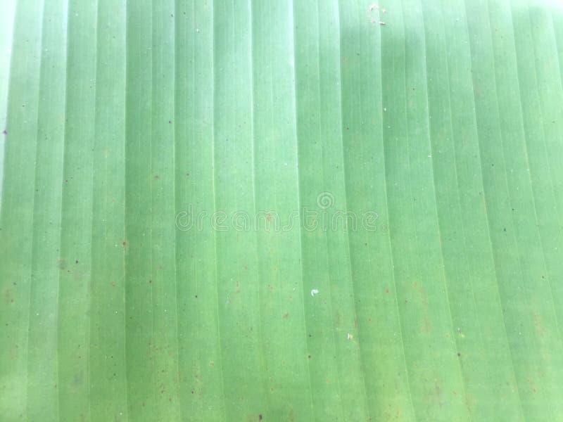 folha da banana fotografia de stock