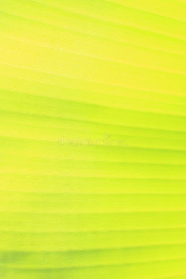 folha da banana fotos de stock royalty free