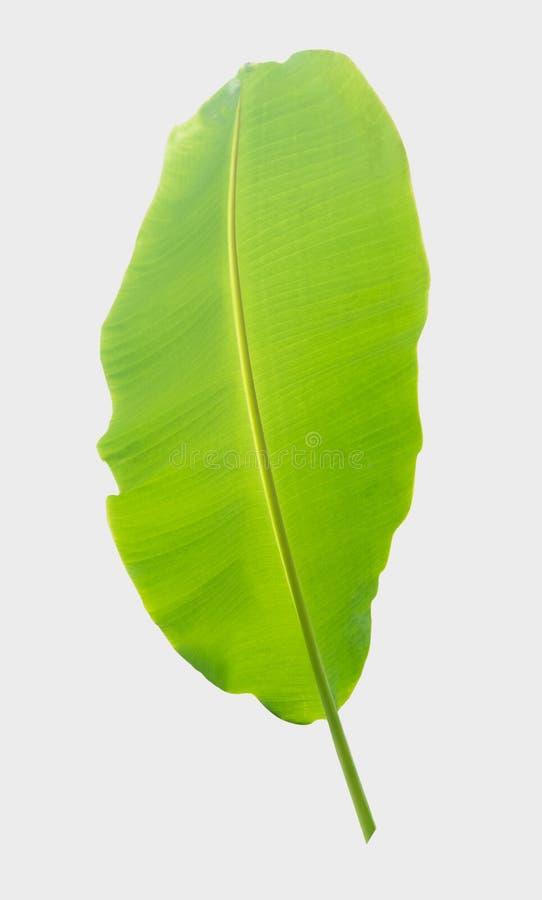 folha da banana Isolado no fundo branco com trajeto de grampeamento imagens de stock royalty free