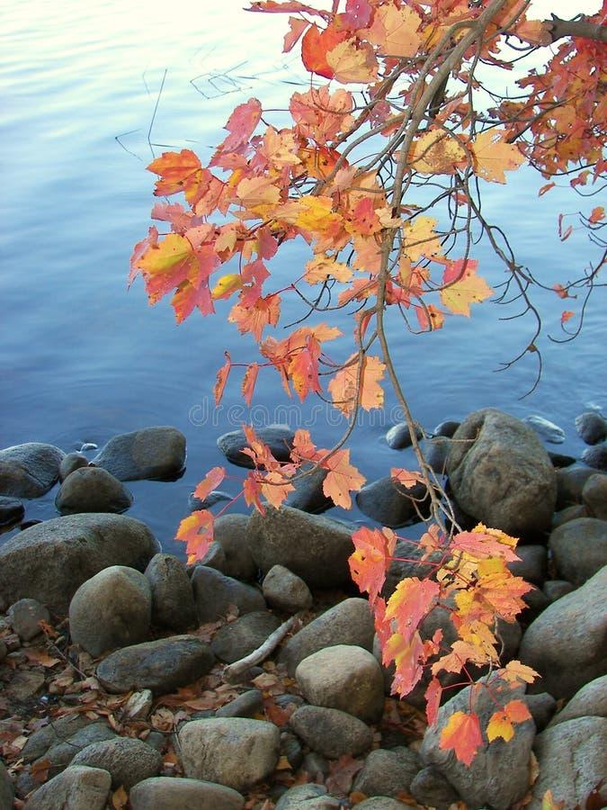 Folha da beira do lago fotografia de stock royalty free