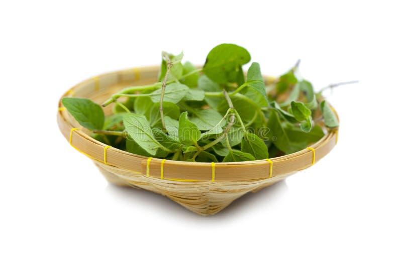 Folha da Erva-manjericão na cesta isolada no fundo branco imagem de stock royalty free