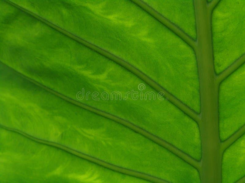 Folha da flor imagem de stock