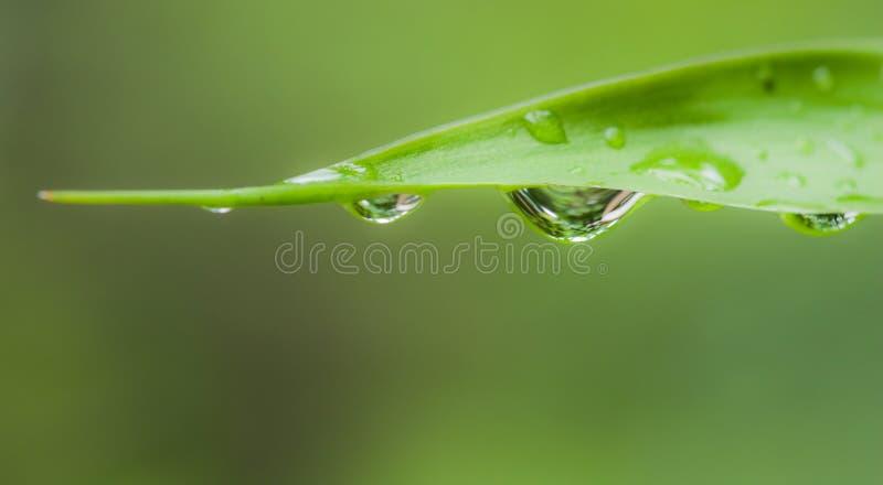 Folha da gota da água imagens de stock