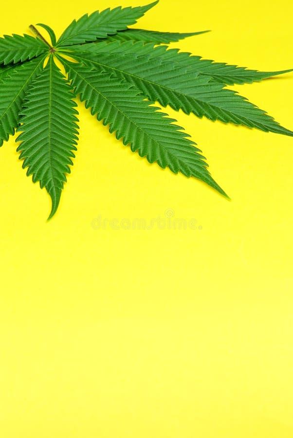 Folha da marijuana imagem de stock