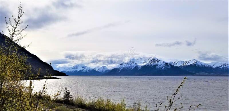 Folha da mola no cozinheiro Inlet, Alaska fotos de stock royalty free