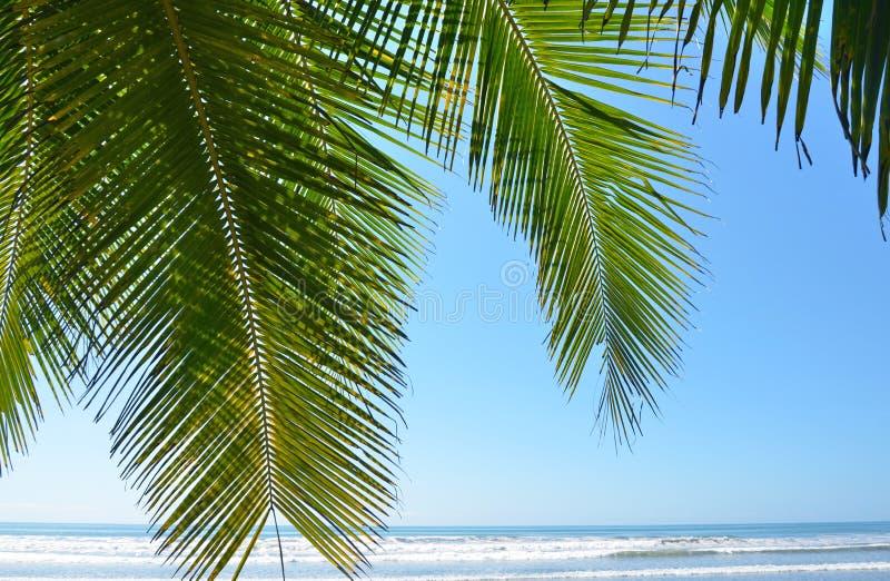 Folha da palmeira fotos de stock
