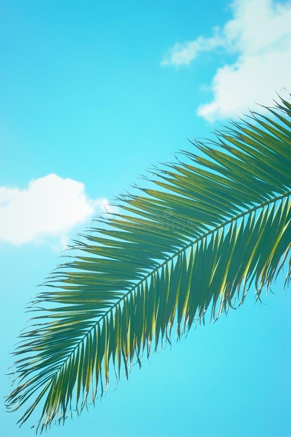 Folha da palmeira contra o céu azul; fundo do verão imagem de stock royalty free