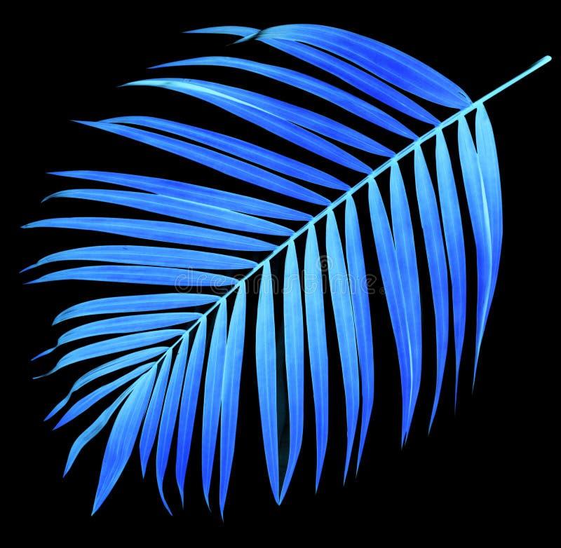 Folha da palmeira no preto foto de stock royalty free