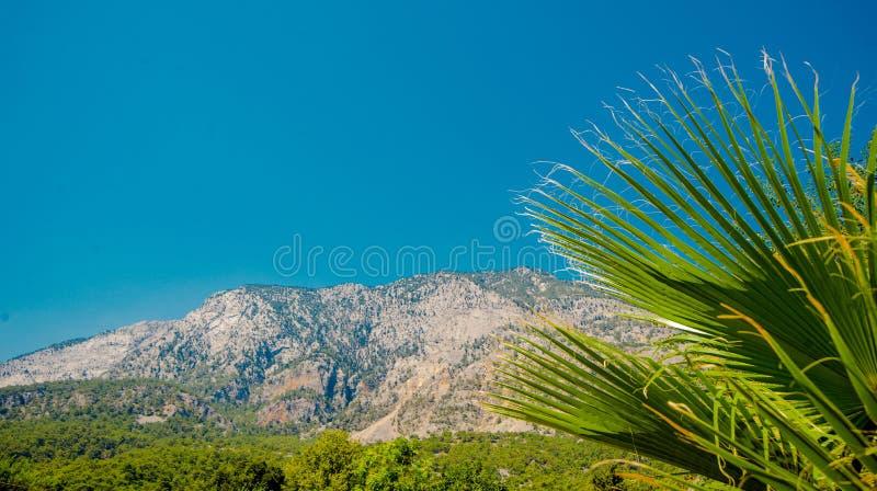 A folha da palmeira verde, do lado direito, contra o fundo do céu Paisagem tropical do ver?o fotografia de stock royalty free