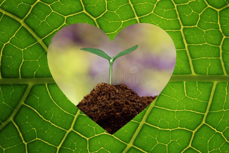 Folha da planta do conceito da ecologia do amor foto de stock royalty free