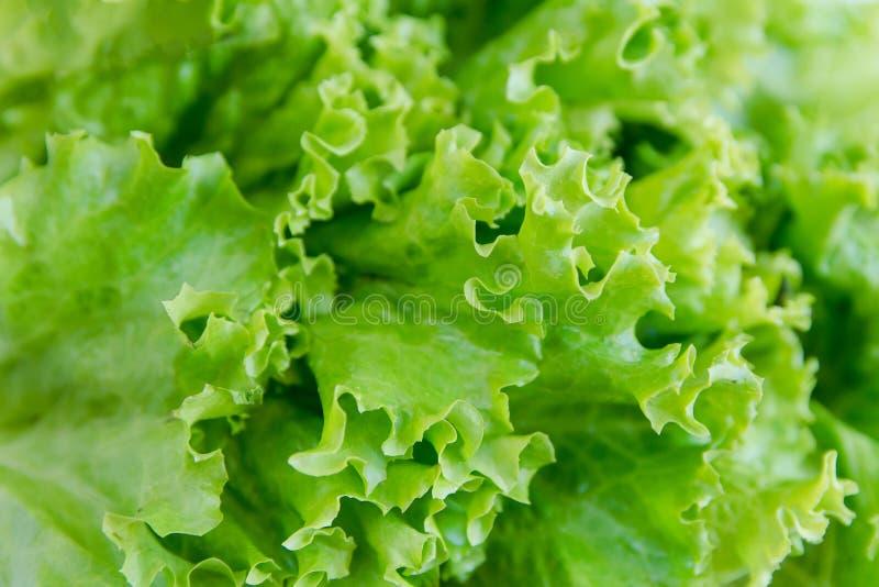 Folha da salada Fundo da alface Fundo dos vegetais fotografia de stock