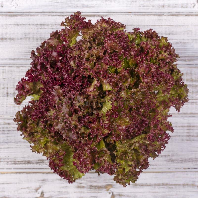 Folha da salada Planta da salada da alface, folhas hidropônicas do vegetal imagem de stock