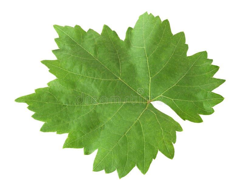 Folha da uva isolada com trajeto de grampeamento imagens de stock royalty free