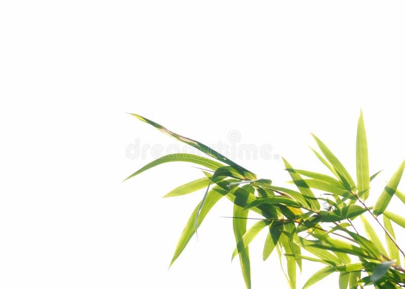 Folha de bambu foto de stock royalty free