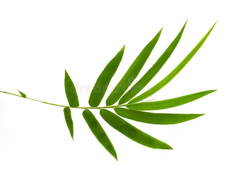 Folha de bambu isolada no fundo branco Inclua o trajeto de grampeamento foto de stock