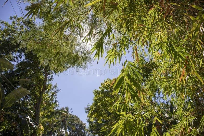 Folha de bambu verde no fundo do céu azul Foto tropical bonita da paisagem Lugar exótico para férias foto de stock royalty free