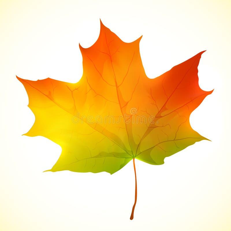 Folha de bordo brilhante isolada do vetor do outono ilustração stock