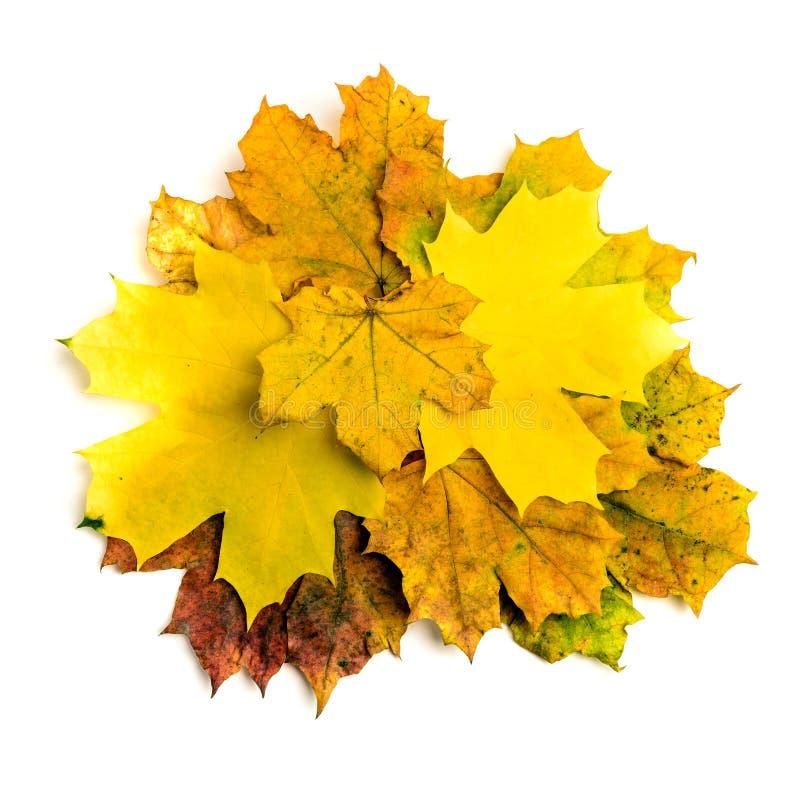 Folha de bordo da queda do outono do montão isolada imagem de stock