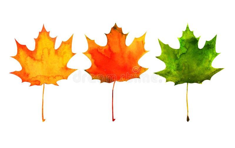 Folha de bordo em cores vermelhas, amarelas, verdes fotos de stock royalty free