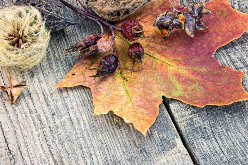 Folha de bordo seca amarela e vermelha colorida, flores secadas e plantas imagem de stock