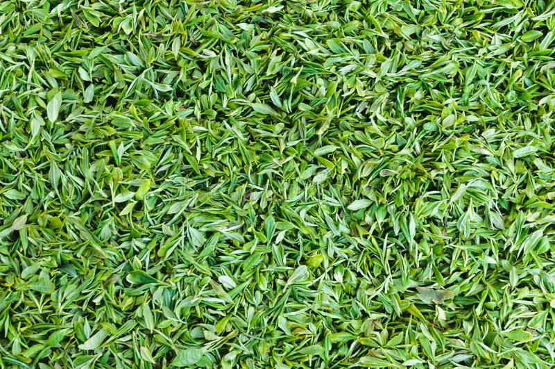 Folha de chá verde fotos de stock royalty free
