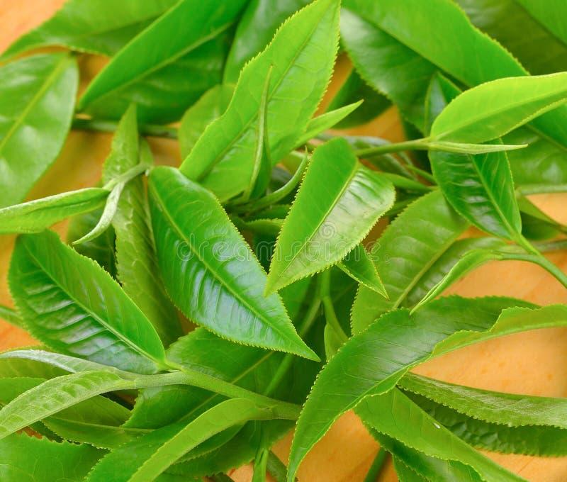 Folha de chá verde fresca em de madeira foto de stock royalty free
