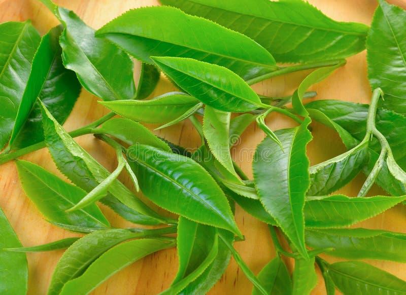 Folha de chá verde fresca no fundo de madeira imagem de stock royalty free