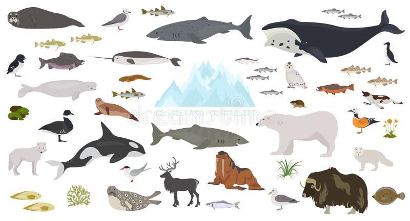 Folha de gelo e bioma polar do deserto Mapa do mundo terrestre do ecossistema Projeto infographic ártico dos animais, dos pássaro ilustração royalty free