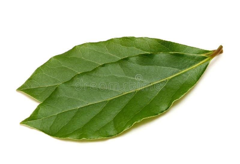 Folha de Green Bay fresca isolada no fundo branco foto de stock
