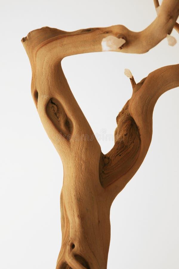 A folha de madeira da casca velha da árvore sae do plantador fotos de stock